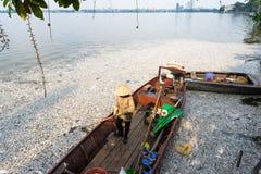 Massentod von den Fischen, die auf verunreinigtes Seewasser mit einem Boot atemping ist, um tote Fische aus Wasser heraus zu nehm Stockfoto