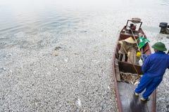 Massentod von den Fischen, die auf verunreinigtes Seewasser mit einem Boot atemping ist, um tote Fische aus Wasser heraus zu nehm Lizenzfreies Stockbild