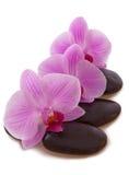 Massera stenar med orchiden Royaltyfri Foto