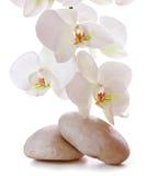 Massera stenar med orchiden Royaltyfri Fotografi