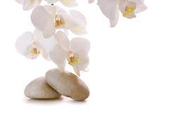 Massera stenar med orchiden Royaltyfri Bild