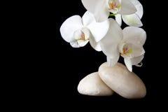 Massera stenar med orchiden Fotografering för Bildbyråer