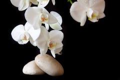 Massera stenar med orchiden Arkivbilder
