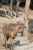 Masses of deer Stock Images