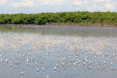 Masses Seagulls On Wetlands Stock Photo