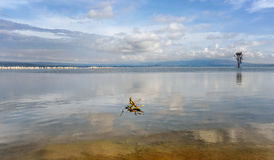 Masses of White Pelican birds and flamingos on the lake Nakuru, Royalty Free Stock Photo