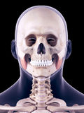 The masseter superior Stock Photography