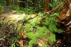 Massi-Baum im Regen Lizenzfreie Stockbilder