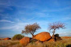 Massi del granito ed alberi, Namibia immagini stock
