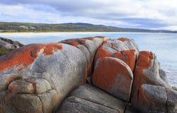 Massi del lichene sulla baia di fuoco Tasmania fotografia stock