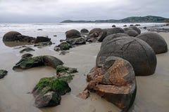 Massi di Moeraki sulla spiaggia di Koehohe in Nuova Zelanda immagini stock libere da diritti