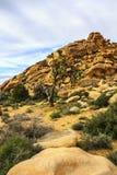 Massi, formazioni rocciose rosse sulla traccia di escursione in Joshua Tree National Park, California, Stati Uniti Fotografia Stock Libera da Diritti