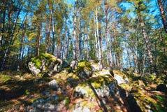 Massi nel legno nella caduta fotografie stock libere da diritti
