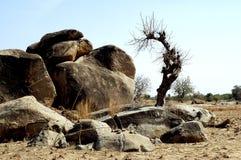 Massi nel paesaggio della savanna Fotografia Stock
