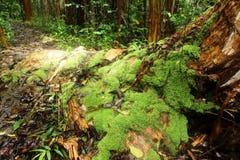 Massi träd i regnet Royaltyfria Bilder