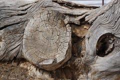 Massiccio di vecchio legno Fotografie Stock