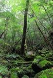 Massief groen gebladerte in het diepste hout van het park van de het Ravijnaard van Shiratani Unsuikyo, Japan royalty-vrije stock foto's