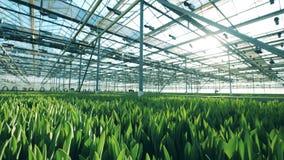 Massieve die warmhouse met groene bloemspruiten wordt gevuld stock video