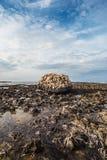 Massieve, geërodeerde steen op de rotsachtige kust tijdens de afvloeiing Royalty-vrije Stock Foto