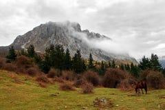 Massif de Itxina com névoa e um cavalo fotos de stock royalty free