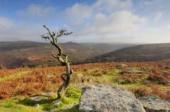 Massif de roche Dartmoor de Combestone Photographie stock libre de droits