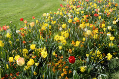 Massif Of Yellow, Orange And White Flowers Stock Images