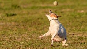 Massimo - il mio migliore amico pazzo della palla! fotografia stock libera da diritti