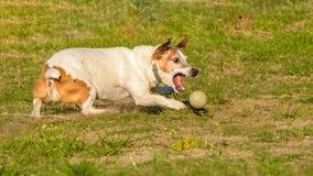 Massimo - il mio migliore amico pazzo della palla! fotografia stock