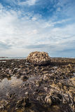 Massiv eroderad sten på den steniga kusten under utflödet Royaltyfri Foto