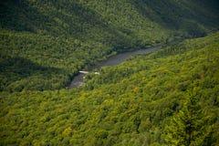 Massiva träd i en skogdal i Kanada Royaltyfria Foton