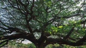 Massiva trädfilialer Arkivfoto