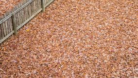 A massive amount of leaves covering every square inch of a back yard. stock image
