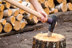 Massive axe with mens hand stuck in a birch stub. Royalty Free Stock Image