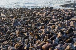 Massive colony of South African fur seals at Cape Cross, Namibia, Southern Africa stock images