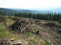 Massive deforestation Royalty Free Stock Images
