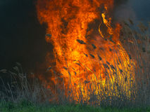 Massive fire with tongues of flame Royalty Free Stock Photos