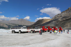 Massive Ice Explorers, specially designed for glacial travel, take tourists in the Columbia Icefields, Canada Stock Photos