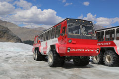 Massive Ice Explorers, specially designed for glacial travel, take tourists in the Columbia Icefields, Canada. ALBERTA, CANADA- JULY 27  Massive Ice Explorers Royalty Free Stock Photo