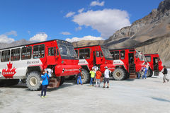 Massive Ice Explorers, specially designed for glacial travel, take tourists onto the surface of the Athabasca Glacier. ALBERTA, CANADA- JULY 27: Massive Ice Stock Image