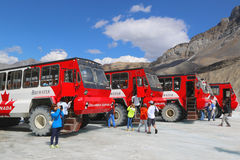 Massive Ice Explorers, specially designed for glacial travel, take tourists onto the surface of the Columbia Icefields, Canada Royalty Free Stock Photo