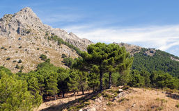 Massive landscape. A massive landscape surrounded by trees, in the village of Grazalema in Spain. We also see sky and clouds Stock Image