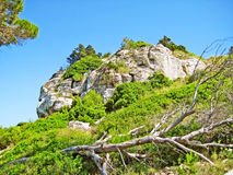 Massive mountain rock with green bushes Royalty Free Stock Images