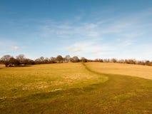 Massive open plain farm field grass agriculture england blue sky ahead big empty path. Essex; england; uk Royalty Free Stock Photography
