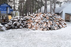 Massive Pile Of Firewood Cut By Lumberjack Pine Trees Covered In Light Snow Royalty Free Stock Photo