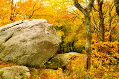 Massive rock surrounded by yellow leaves. Stock Images