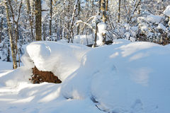 The massive snow in the forest Royalty Free Stock Image