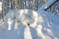 The massive snow in the winter forest Royalty Free Stock Photos