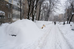 Massive snowfall in the neighbourhood Royalty Free Stock Image