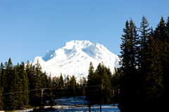 Massive Snowy Mountain Mount Hood. The massive snowcapped mountain that is Mt Hood standing tall on a perfect winters day in Oregon. Pine trees litter the ground Royalty Free Stock Photo