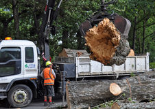 Massive Tree Falls in Christchurch, New Zealand. 11 Februray 2011, Christchurch, New Zealand. A worker lifts a section of a huge 40 metre Poplar tree via a Hiab stock photography